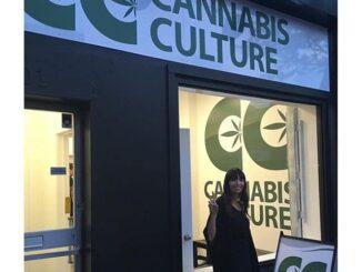 canabis-culture-jodie-emery