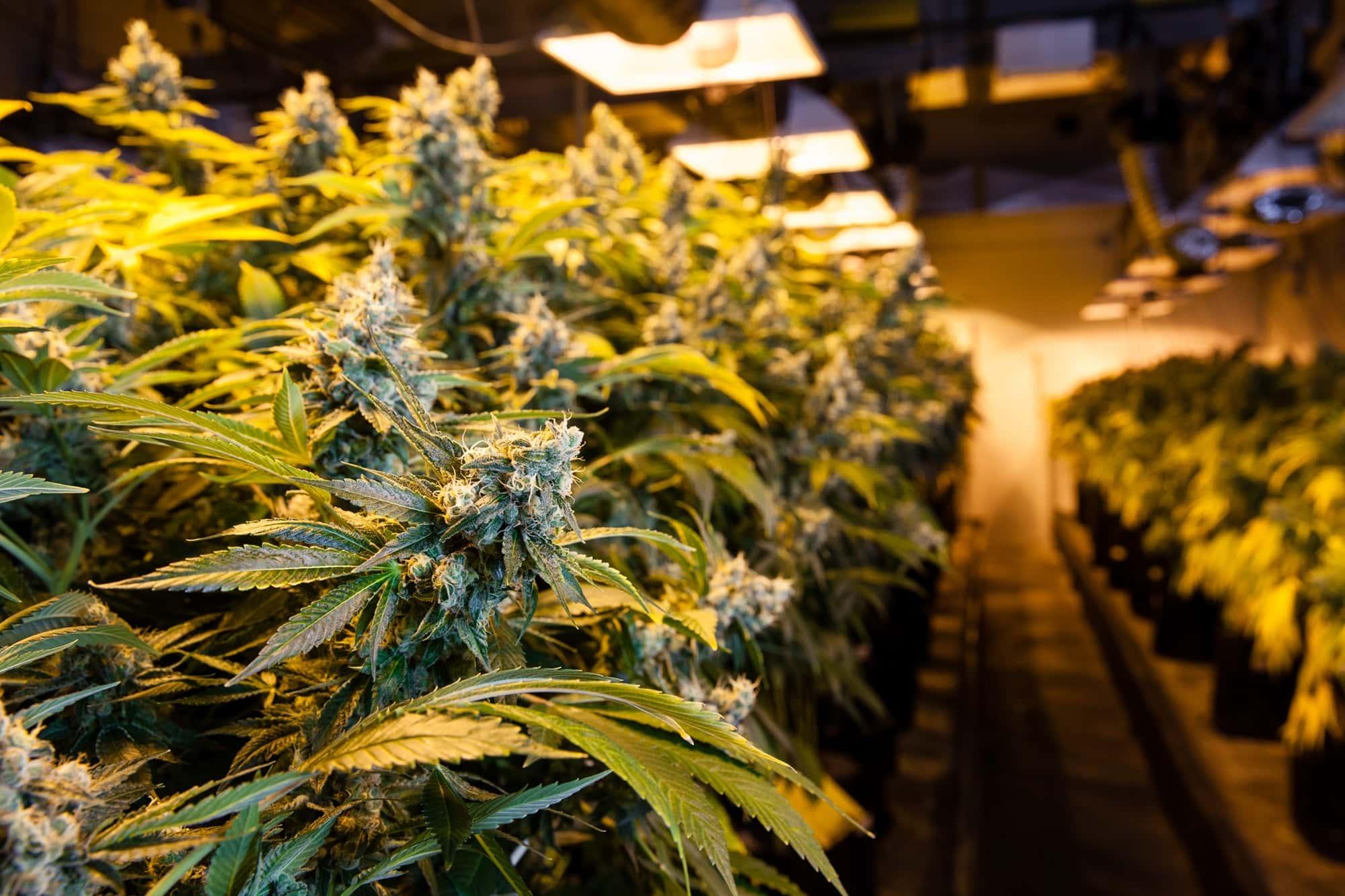 directory of marijuana dispensaries
