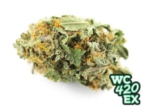 Gorilla Glue #1 strain review