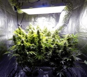 Example of a grow space