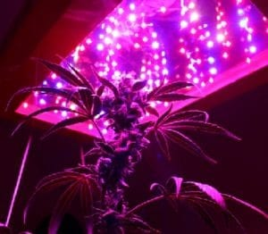 A grow light