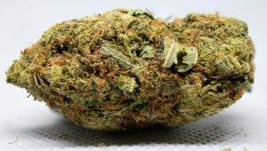 Pink star strain review flower