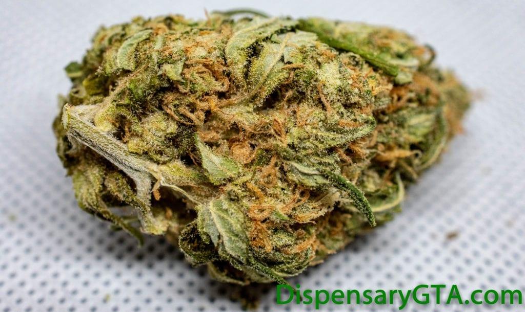Strawberry Cough (80 Sativa/20 Indica)
