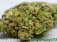 OG Cali Kush Featured Image Strain Review