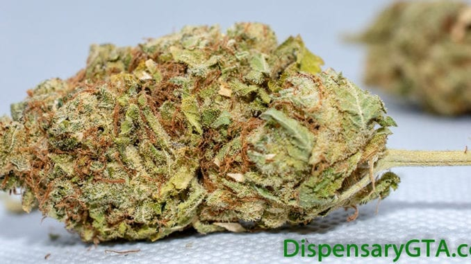 violator flower dispensarygta strain review