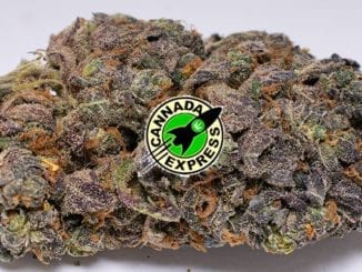 Purple Sour Diesel featured image
