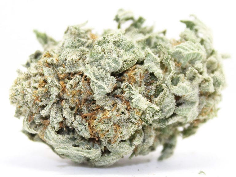 green posion best indica 2018