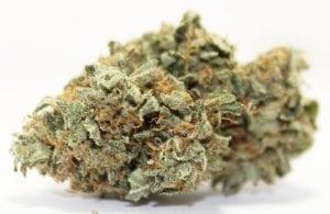 Northern Lights #5 cannabis strain
