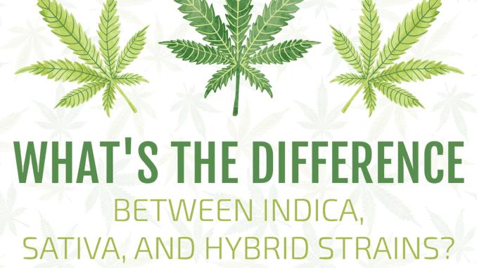sativa-vs-indica-vs-hybrid