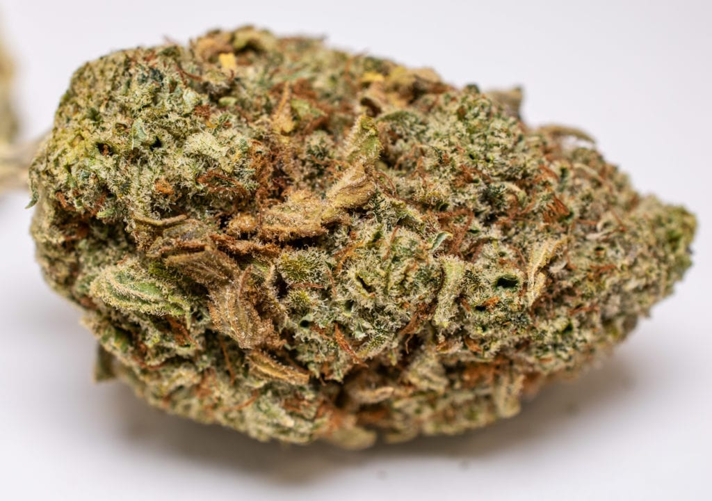 Great White Shark strain review