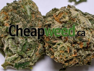 Cheapweed featured image