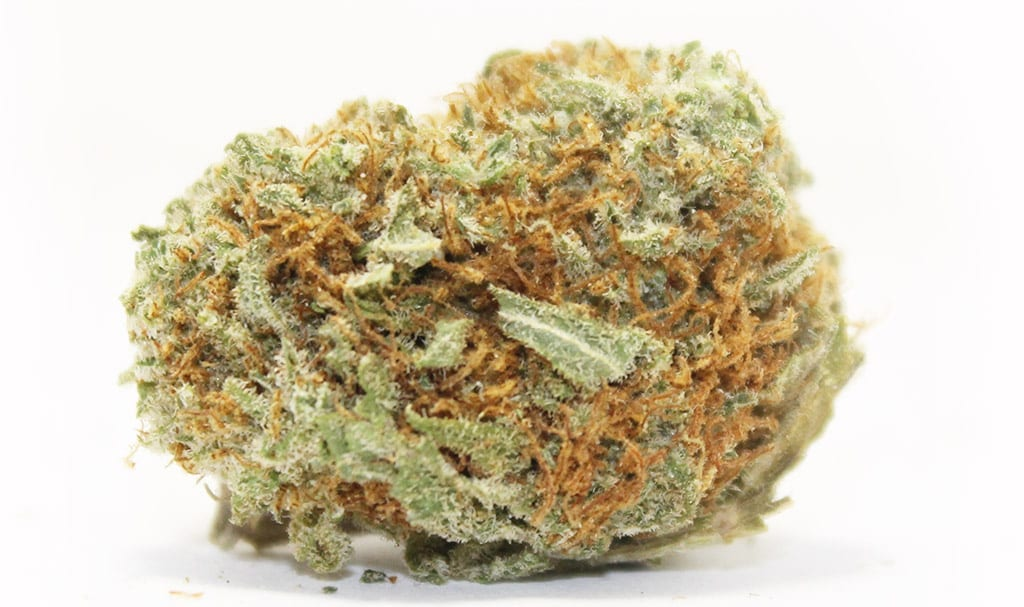 moby dick best sativa