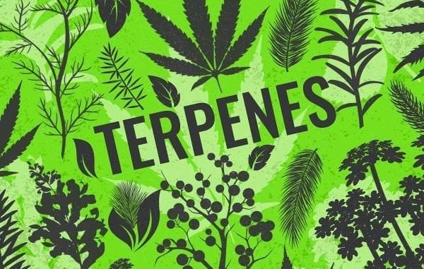 Terpenes Dispensarygta