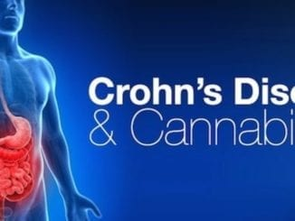 Chrons disease and cannabis