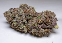 Purple Space Cookies Quad from CannaWholesalers