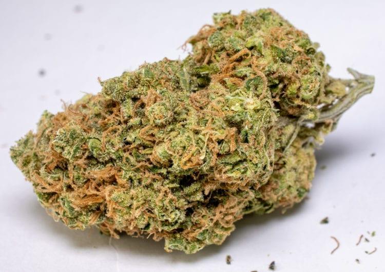Sweet Tooth Marijuana Strain Speed Greens