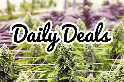 cannabis daily deals