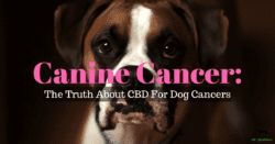 cbd cancer dogs