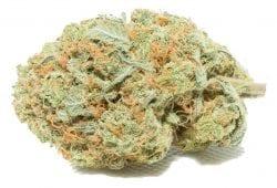 Gorilla Glue #4 TheHighClub Bulk Weed
