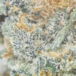 Jack herer green society bulk