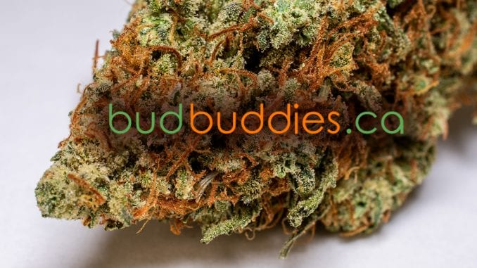 budbuddies review