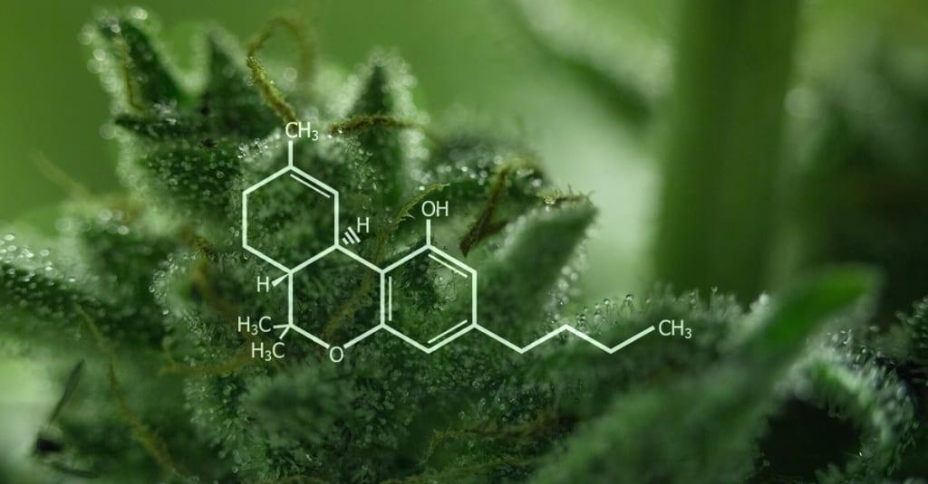 Understanding THC