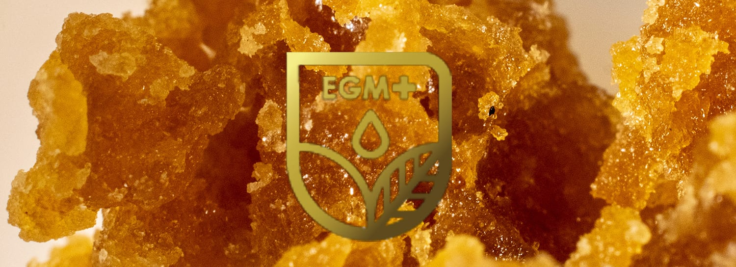 budder evergreen medicinal