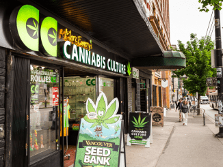 cannabis culture dispensary