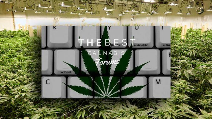 cannabis forums