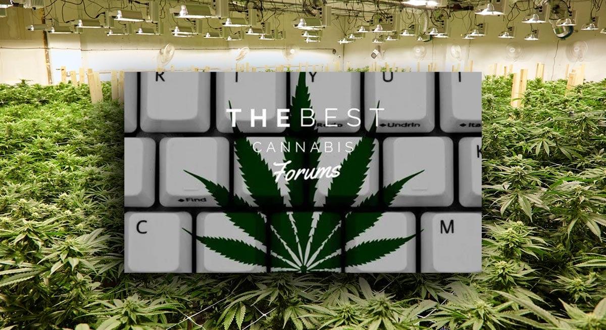 cannabis forums