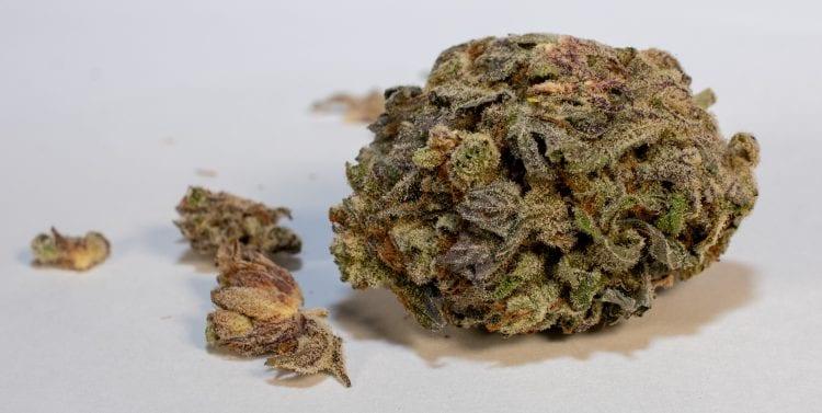 Purple God Weed