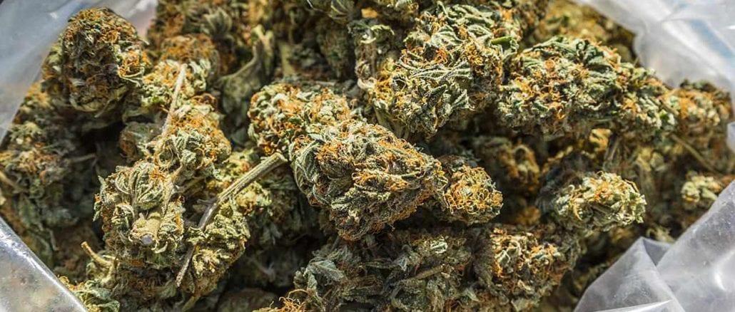 weed in bags