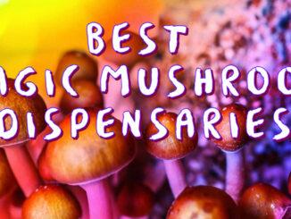 best mail order magic mushrooms canada