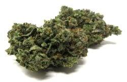 Gelato (Hybrid) – AAAA – SUPER QUAD Cannabis