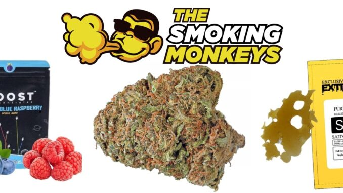 the smoking monkeys