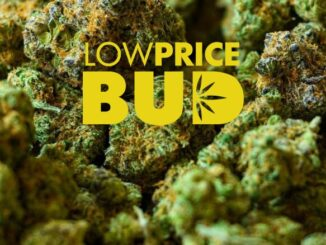 low priced bud